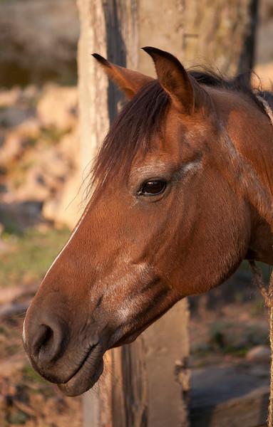Horse at Sanasar, Jammu, India