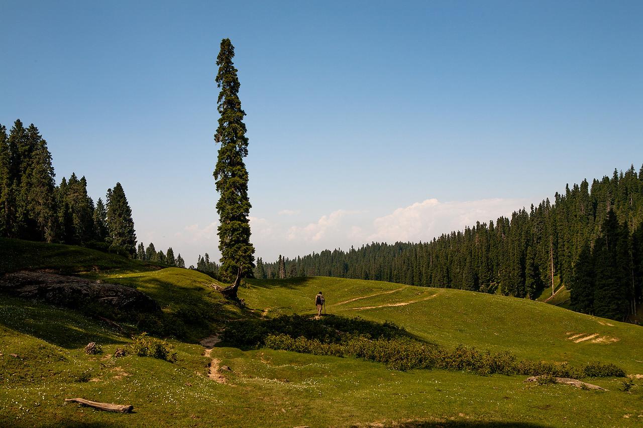 Yusmarg, Kashmir, India