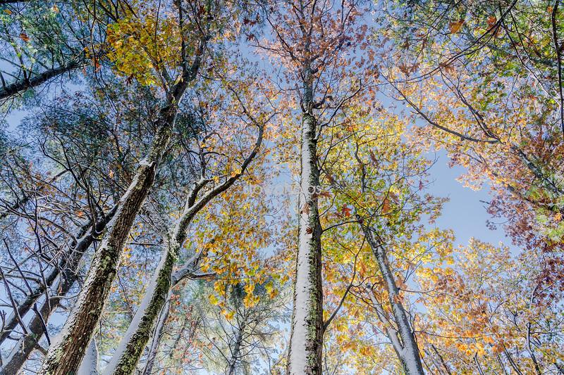 Autumn Snowfall, Stow, Massachusetts