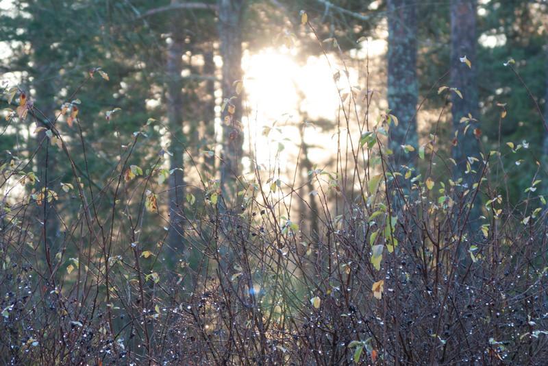 Strängnäs. 2008 Dec 21 @ 11:06