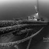 Newell Eddy Shipwreck Lake Huron