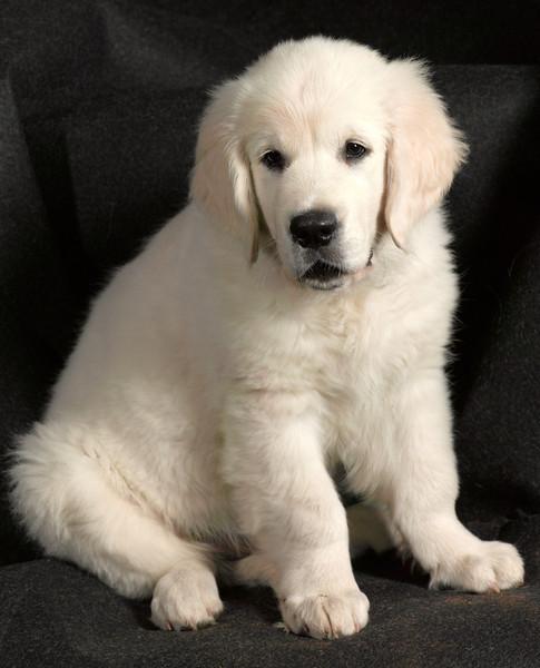 Dog172