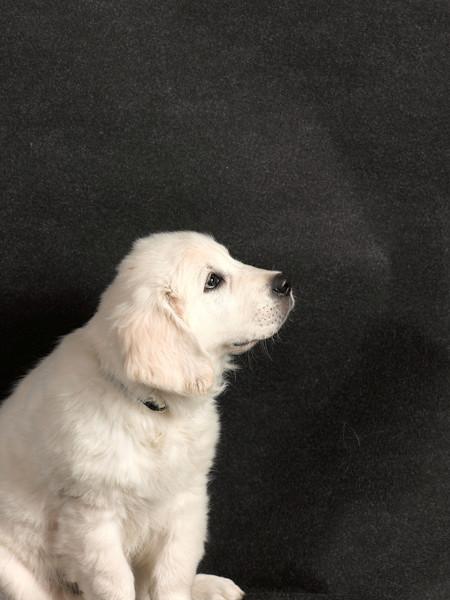 Dog170