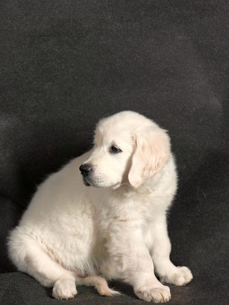 Dog171