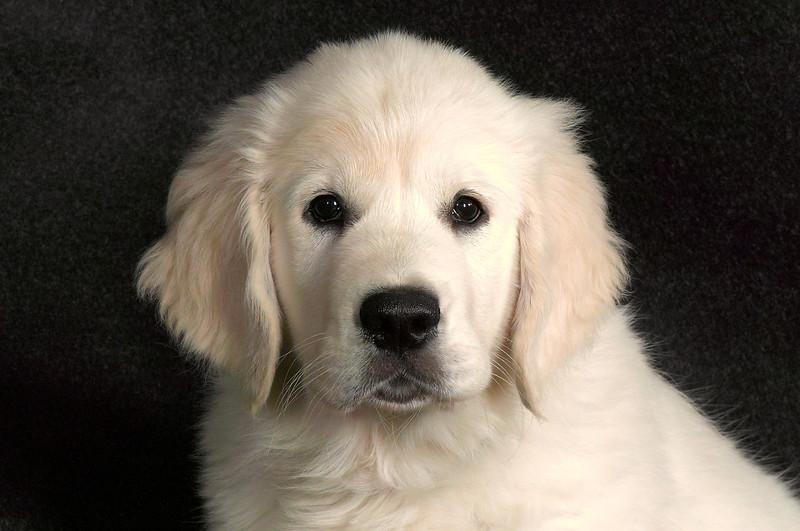 Dog169