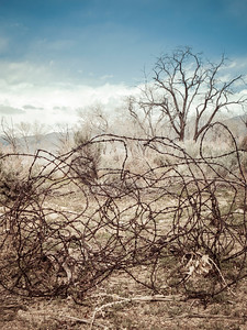 Tangled barbed wire in the west