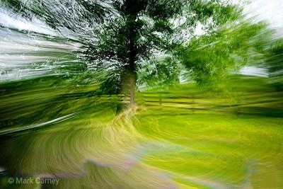 tree panning 7