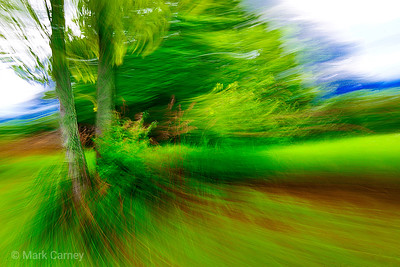 tree panning 9