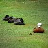 Ducks in a row...