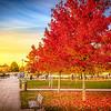 Autumn Scene in Stratford 2016