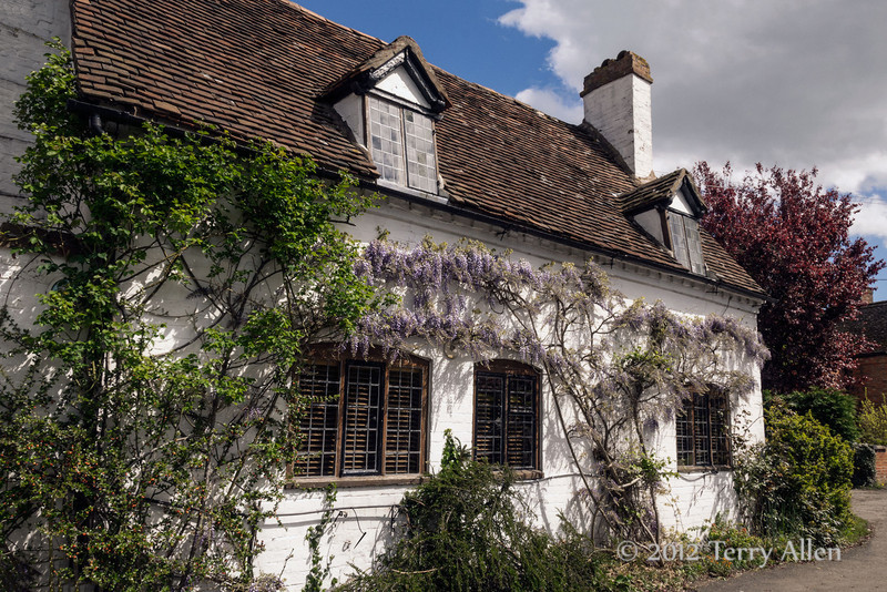 Old wisteria-covered cottage, Stratford upon Avon<br /> <br /> There isn't a straight line or corner to be found anywhere in the picturesque old Elizabethan houses in Stratford upon Avon