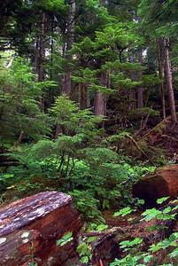 Strathcona Park, Vancouver Island