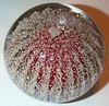 "P3 Urchin Large : This is Strathearn's Sea Urchin paperweight. Strathearn's description reads..""Rough texture sea urchin appearance"" however, it is comprised of twenty vertical rows of Scottish sand over an internal colored cushion. Colors stated are only Red and Green but I have found other colors as shown in the two albums listed. Sizes range from Large to Medium/small and there may be a minature size but I've not found one yet. Yearly production is unknown at this time. Circa for the time being 1965 to 1979."