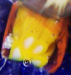 DCP1946to1955-4616YVP ClosepackSpoke-a12