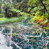 Dead Tree Swamp