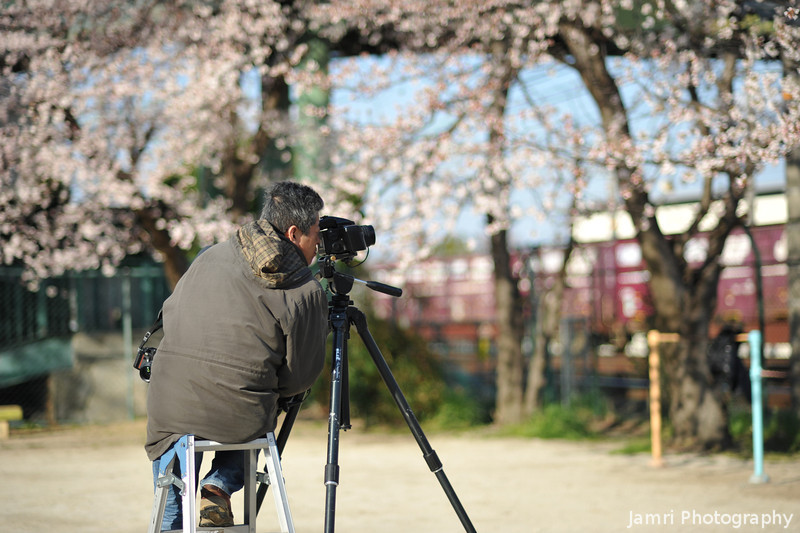 A Photographer Capturing the a Train and the Sakura.