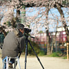 A Photographer Capturing the a Train and the Sakura.