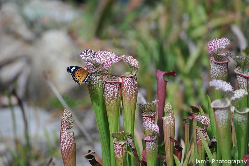 Careful Little Butterfly