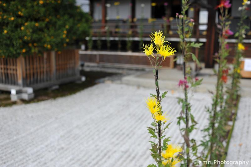 Saga Chrysanthemums and Mikan Tree