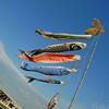 A few more Koi Banners