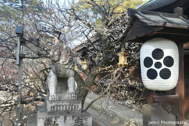 Guardian Lion and Lantern