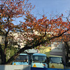 Autumn Leaves and Buses