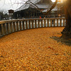 Gingko Carpet