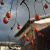 Persimmons and a Japanese House