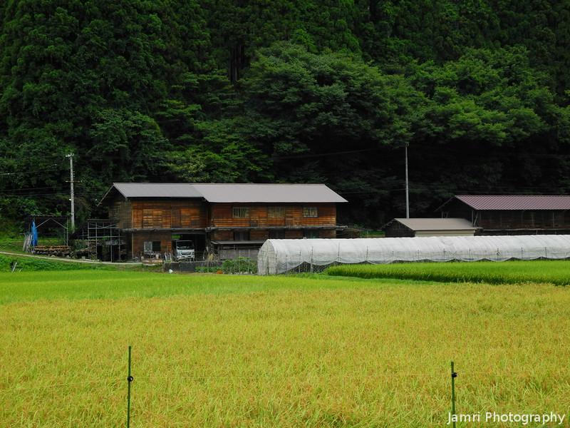 Towards a Wooden Barn