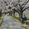 Watching the world go by.<br /> Best thing to do in the Sakura season.