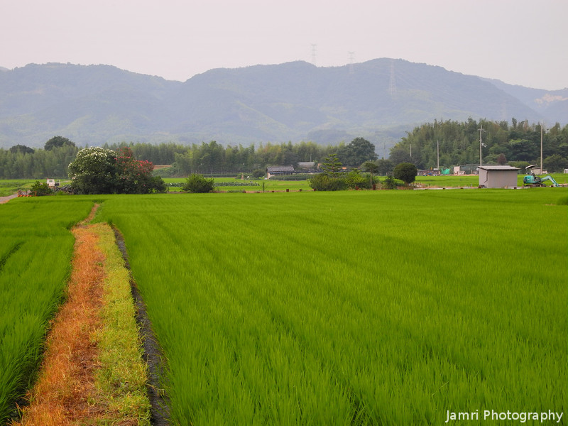 Arriving at a Big Rice Field