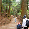 The Mountain Trail.<br /> On Mount Atago.<br /> Most of the trail was like this, there were only a few spots were we could get a view.