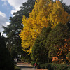 Autumn in the Gardens