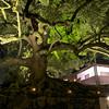 At the Gnarled Tree