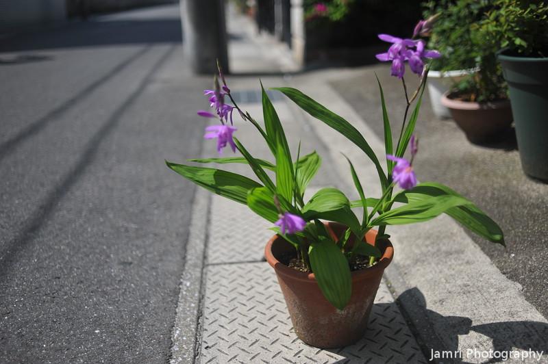 The Shiran Plant