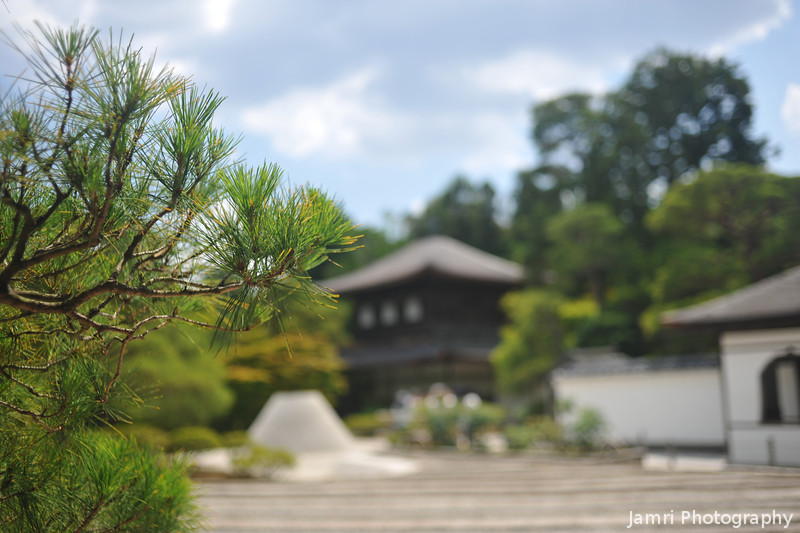 A Pine at Ginkaku-ji.