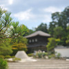 A Pine at Ginkaku-ji.