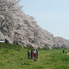 Gathering for a photo by the Sakura Pathway.<br /> Gives just a little idea of the size of the Sakura Pathway at Yawata.