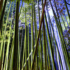 Colours in the Bamboo Forest.<br /> During the Arashiyama Hanatouro.