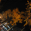 Looking Up at the Ginkgoes.<br /> Wow in Osaka the Ginkgoes still had leaves on them on the 16th of December. Where I live only 50km away they'd all lost their leaves by about the 2nd of December.<br /> Lit up of the 2012 Hikari Renaissance.