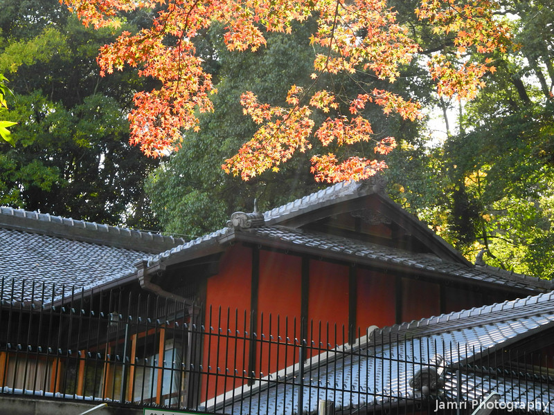 Catching a bit of Sunlight.<br /> A Maple Tree by the Restaurant in Nagaoka Tenmangu Shrine Park.