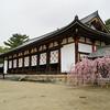 A Wider Shot of the a Temple Building and Shirare-zakura.<br /> At Houryu-ji, Ikaruga-cho, Ikoma-gun, Nara-ken, Japan.