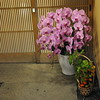 Flowers in Front of a Door