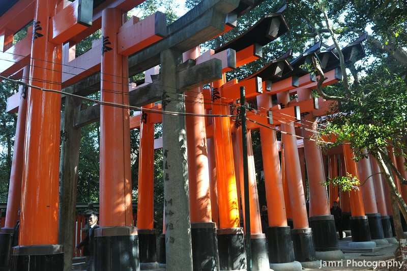 To the Side of a Torii Tunnel