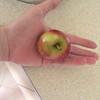 A Little Apple 1