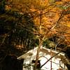 A White House and Orange Leaves.<br /> In Arashiyama, Kyoto.
