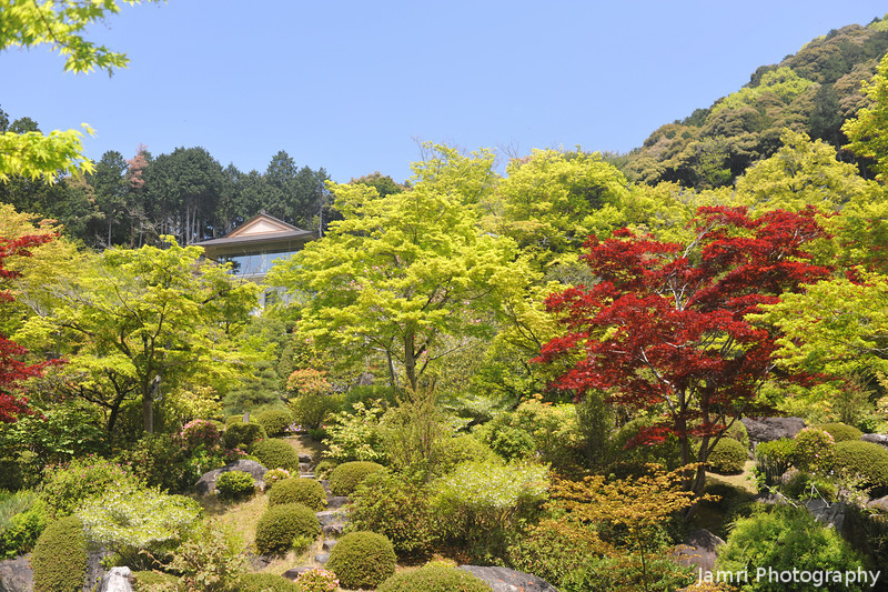 Looking Up Hill.<br /> At Mimuroto-ji (a Buddhist Temple), in Uji city, Kyoto-fu, Japan.