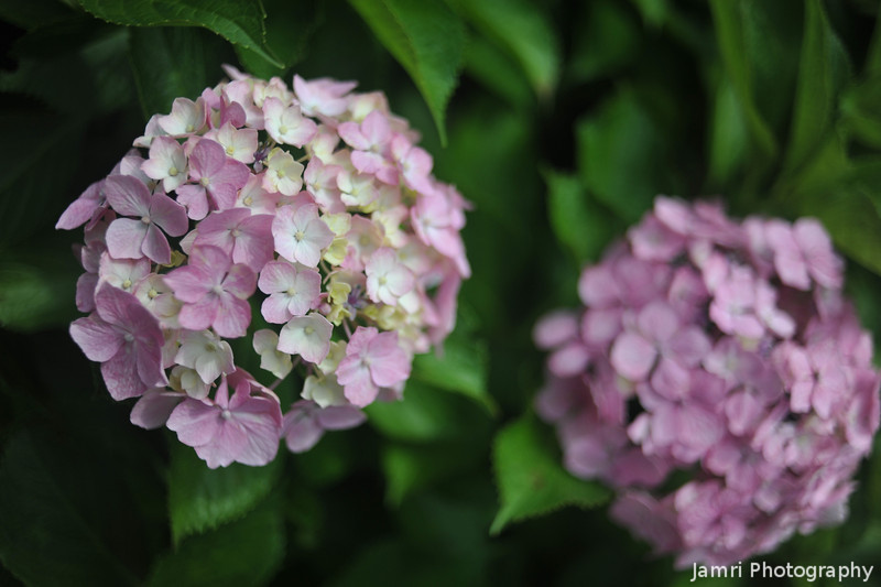 A Pair of Light Pinks