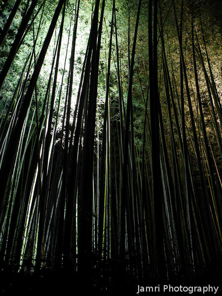 The Long Bamboos.<br /> At the 2012 Arashiyama Hanatouro.