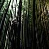 The Long Bamboos.<br /> At the 2012 Arashiyama Hanatouro.